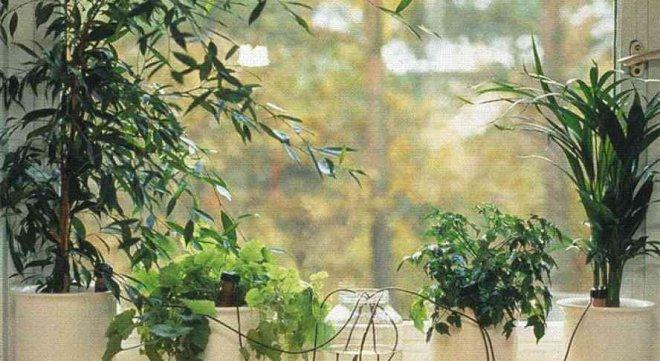 Как в домашних условиях избавиться от жировика с помощью растений?