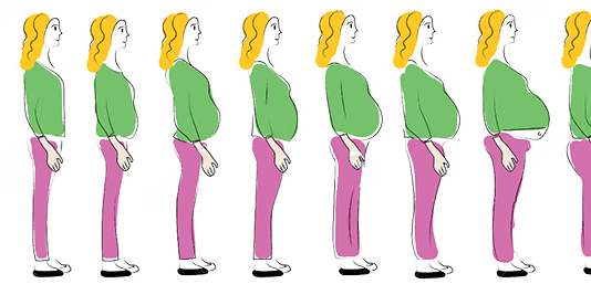 Как рассчитать срок беременности?
