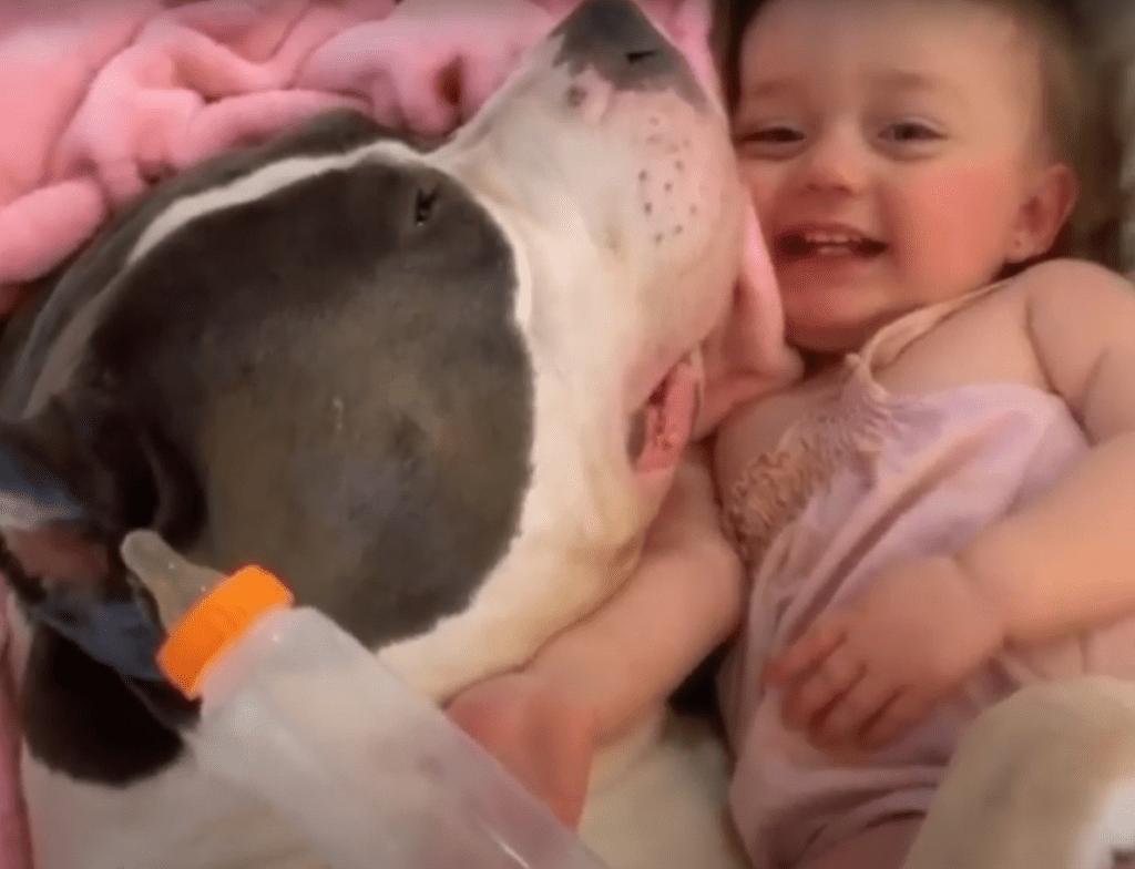 собака и ребенок 2
