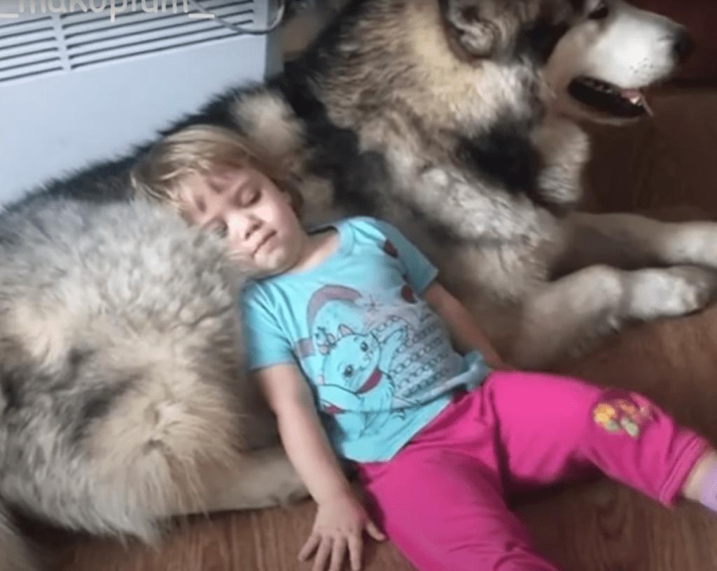 собака и ребенок 4